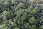 Borneo rainforest -- sabah_aerial_2584