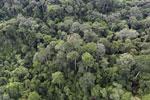 Borneo rainforest -- sabah_aerial_2585