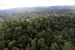 Borneo rainforest -- sabah_aerial_2586