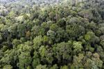 Borneo rainforest -- sabah_aerial_2587