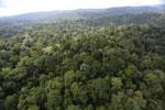 Borneo rainforest -- sabah_aerial_2588