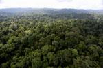 Borneo rainforest -- sabah_aerial_2589