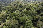 Borneo rainforest -- sabah_aerial_2590