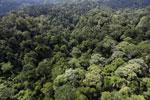 Borneo rainforest -- sabah_aerial_2591