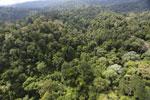 Borneo rainforest -- sabah_aerial_2592