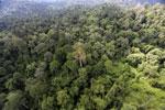 Borneo rainforest -- sabah_aerial_2593