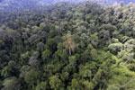 Borneo rainforest -- sabah_aerial_2594