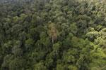 Borneo rainforest -- sabah_aerial_2596