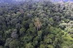 Borneo rainforest -- sabah_aerial_2597