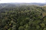 Borneo rainforest -- sabah_aerial_2598