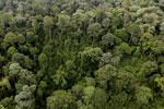 Borneo rainforest -- sabah_aerial_2599