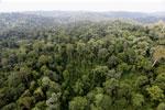 Borneo rainforest -- sabah_aerial_2600