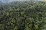 Borneo rainforest -- sabah_aerial_2602