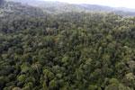 Borneo rainforest -- sabah_aerial_2604