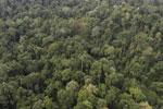 Borneo rainforest -- sabah_aerial_2605