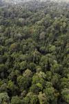 Borneo rainforest -- sabah_aerial_2606