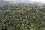 Borneo rainforest -- sabah_aerial_2607