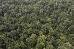Borneo rainforest -- sabah_aerial_2608