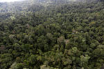 Borneo rainforest -- sabah_aerial_2609