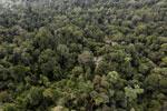 Borneo rainforest -- sabah_aerial_2610