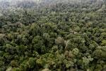 Borneo rainforest -- sabah_aerial_2611
