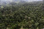 Borneo rainforest -- sabah_aerial_2612