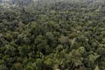 Borneo rainforest -- sabah_aerial_2613