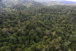 Borneo rainforest -- sabah_aerial_2614