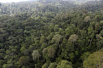 Borneo rainforest -- sabah_aerial_2615