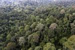 Borneo rainforest -- sabah_aerial_2616