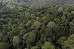 Borneo rainforest -- sabah_aerial_2618