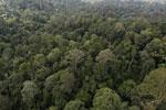 Borneo rainforest -- sabah_aerial_2619