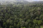 Borneo rainforest -- sabah_aerial_2621