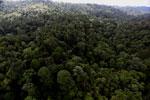 Borneo rainforest -- sabah_aerial_2622