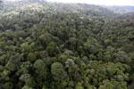 Borneo rainforest -- sabah_aerial_2623