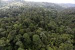 Borneo rainforest -- sabah_aerial_2624