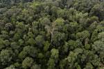 Borneo rainforest -- sabah_aerial_2625