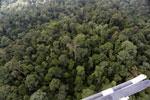 Borneo rainforest -- sabah_aerial_2626