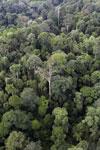 Borneo rainforest -- sabah_aerial_2627