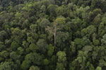 Borneo rainforest -- sabah_aerial_2628
