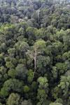 Borneo rainforest -- sabah_aerial_2629