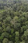 Borneo rainforest -- sabah_aerial_2630