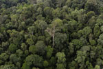 Borneo rainforest -- sabah_aerial_2631