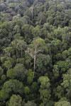 Borneo rainforest -- sabah_aerial_2632