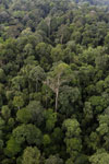 Borneo rainforest -- sabah_aerial_2633