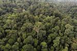 Borneo rainforest -- sabah_aerial_2635