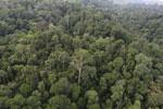 Borneo rainforest -- sabah_aerial_2636