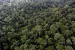Borneo rainforest -- sabah_aerial_2637