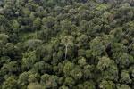 Borneo rainforest -- sabah_aerial_2638