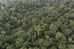 Borneo rainforest -- sabah_aerial_2639